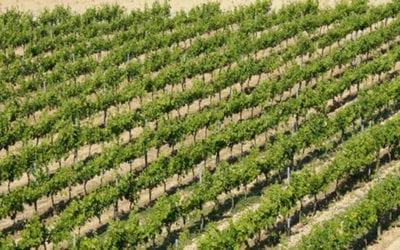 Dal VinItaly alle Terre del Negroamaro: il Sindaco di Verona in Terra d'Arneo
