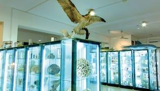museo-biologia-marina