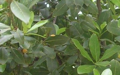 Una iniziativa per conoscere le piante mediterranee